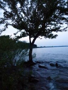 The Manannán Tree.